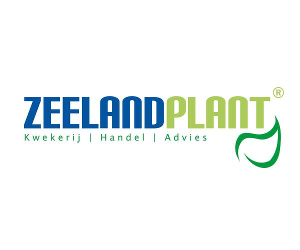 Zeelandplant