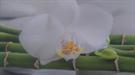 Cvetličarna in trgovina Beli Cvet